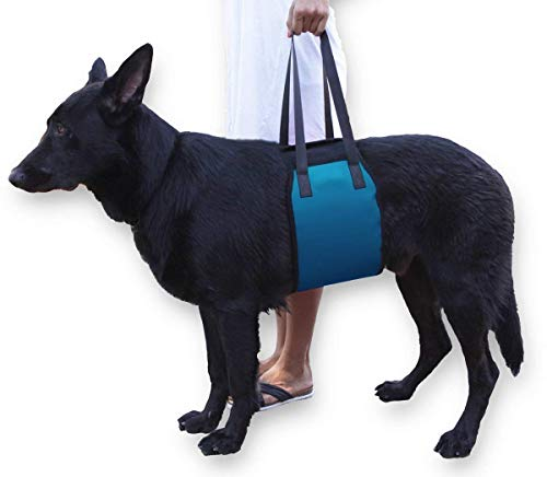Dog Lift Harness, Support Sling Helps Dogs with Weak Front or Rear Legs Stand Up, Walk, Get Into Cars, Climb Stairs. Best Alternative to Dog Wheelchair (L, Blue)
