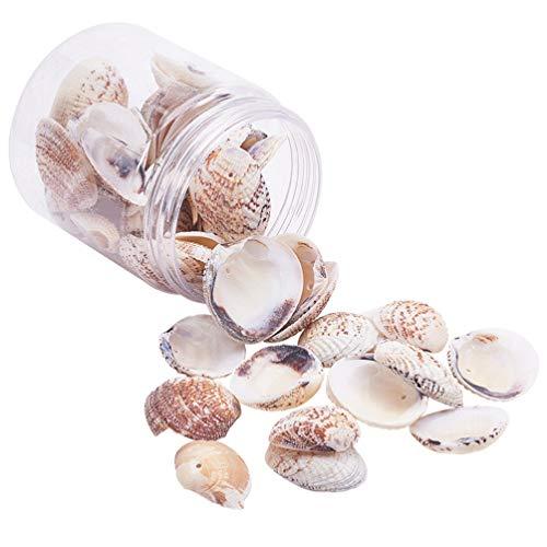 TENDYCOCO DIY Artesanía de Conchas Artesanales Fabricación de Conchas Encantos Accesorios para Decoraciones de Peceras Pulsera Collar Suministros 1 Caja / 50 Piezas