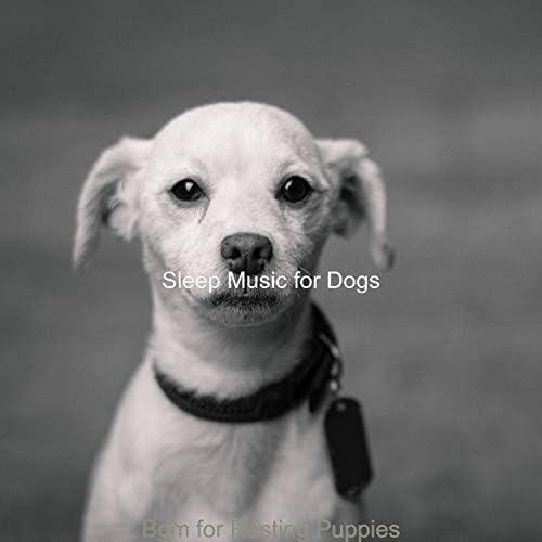 Sleep Music For Dogs