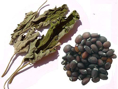 Cataire 70 graines - SEM03 - + Echantillon plant sécher - Nepeta Cataria - Catnip - (Herbe à Chats)