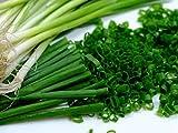 "Scallion ""Kyoto Kujo Negi"" – Bunching Onion - Resilient Green Onion Variety   Liliana's Garden  "