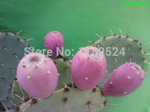 Nouvelle arrivée Hot Sale Graines De Flores Sementes 10Pcs 100% d'origine fraîches Graines rares Figuier de fruits