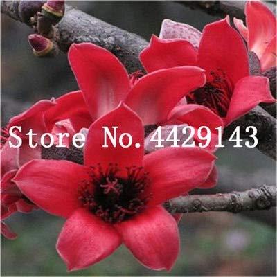 RETS Red Magnolia Bonsai Häufige Magnolia Blumen Bonsai Pot Hausgarten-Anlagen die gesamte Palette der Blumen 50 PC: 7