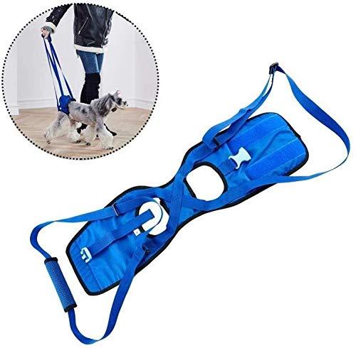 Perro posterior de la pierna tirantes, Ascensor protección de la ...