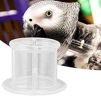 Hffheer Collier pour perroquet - Cônes de récupération d'oiseaux - Bouclier de protection pour oiseaux (S)