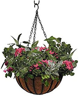 Border Concepts 72260 Wrought Iron Traditional Hanging Basket, 12-Inch, Black