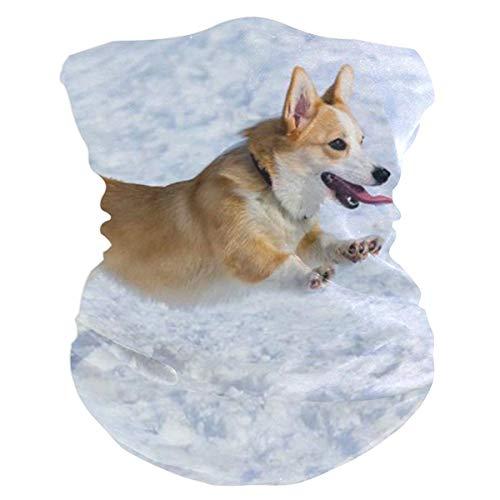 Trista Bauer Divertido perro raza Welsh Corgi Pembroke pasamontañas WoHeadband bufanda Bandana, silenciador, polaina de cuello, magia, pañuelo Aliceband