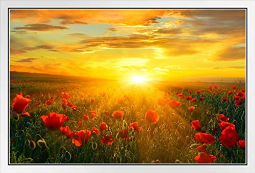 Bright New Day Field of Poppies at Sunrise Landscape Photo Photograph White Wood Framed Poster 20x14