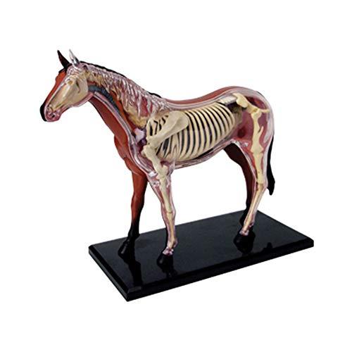 QJXF 4D Horse Anatomy Model Kits, Biology Organ Simulation Animal Medical Teaching Model, Detachable 26 Parts Animal Anatomical Model, Puzzle Assembly Toy