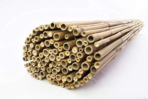 artplants Canisse en Bambou/Clôture Jonah, Naturel, 200x180cm - Paravent extérieur/Brise-Vue canisse