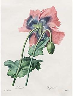 Langlois After Pierre Joseph Redoute Coquelicot Art Impression sur toile de première qualité Décoration murale Poster mural