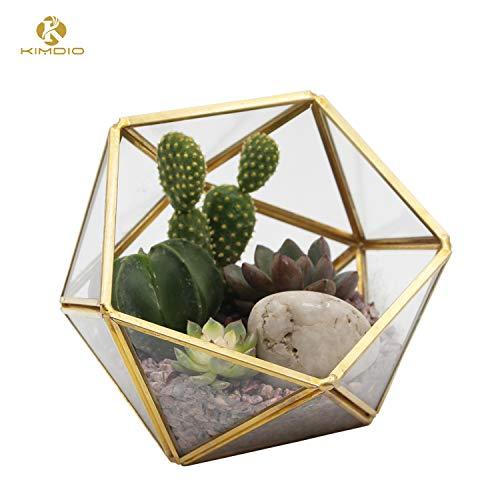 Kimdio Geometric Terrarium Clear Glass Tabletop Planter Air Plant Holder Display for Succulent Fern Moss Air Plants Holder Miniature Outdoor Fairy Garden DIY Gift (M-Gold)