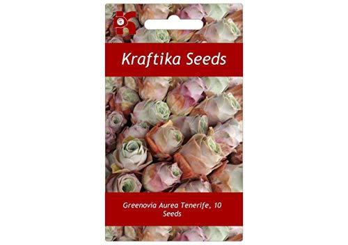 10 Samen Greenovia Aurea Teneriffa, Berg-Rose, Süße Exotische Seltene Sukkulente Blume, Pflanzen, Samen, Geschenk Idee, Dekoration Cactus