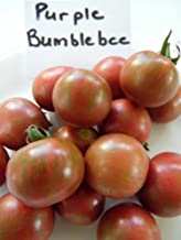 Purple Bumblebee Tomato Seeds - Vegetable Seeds (10)