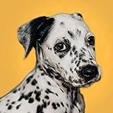 5D Kit De Pintura De Diamante Para Manualidades_perro dálmata Diamond Painting 30x30cm_bordado de diamantes de imitación,para bordar y hacer punto de cruz, para decoración de la pared del hogar
