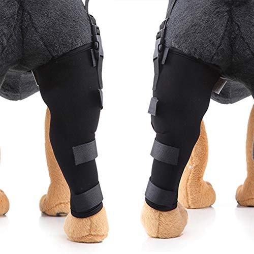 MMUY Hinterbeinstütze des Hundes, Gelenkwickel am Hinterbein schützt Wunden, heilt und beugt Verletzungen und Verstauchungen vor, mit Stabilitätsverlust durch Arthritis (EIN Paar),M