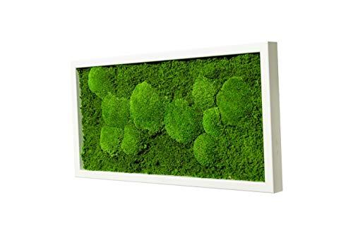 MOOSBILD aus Moos Kugelmoos und Plattenmoos, 60 cm x 30 cm Wandbild mit Rahmen weiß, Pflanzenbild Unikat, Moosbilder