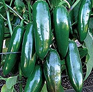 発芽種子:25 - 種子:イスタパX3R F1ハイブリッドハラペーニョ唐辛子の種 - ペッパーズが弱暑いです