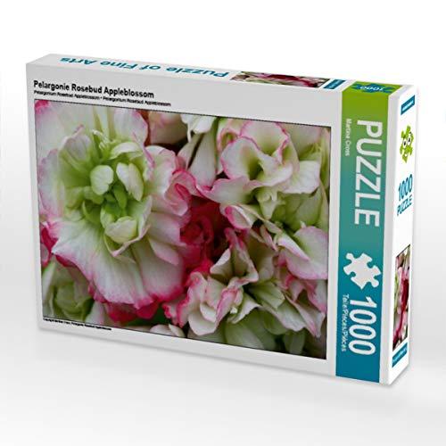 CALVENDO Puzzle Pelargonie Rosebud Appleblossom 1000 Teile Lege-Größe 64 x 48 cm Foto-Puzzle Bild von Martina Cross