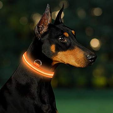 🐕Hundehalsband mit LED Beleuchtung: Superheller LED-Licht zur Verbesserung der Sichtbarkeit Ihrer Hunde im Dunkeln oder an toten Winkeln, um Ihren Hund vor Unfällen oder Verlusten zu schützen. Dieses Led Halsband kann Sichtweite bis zu 300 Meter biet...