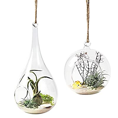 Mkono 2 Pack Glass Hanging Planter Air Plant Terrarium Home Decorations Gift Idea for Succulent Moss Tillandsias Air Ferns Candles, Globe and Teardrop