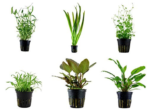 Tropica Einsteiger Set mit 6 einfachen Topf Pflanzen Aquariumpflanzenset Nr.28 Wasserpflanzen Aquarium Aquariumpflanzen