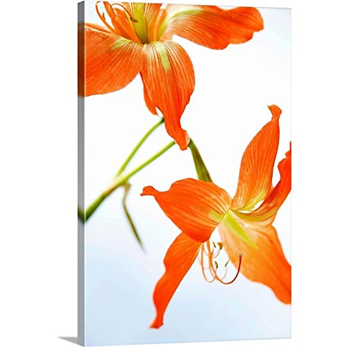 Tiger Lily Canvas Wall Art Print, 12