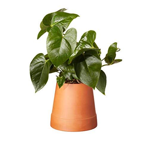 Boskke Flipped - Vaso per fiori