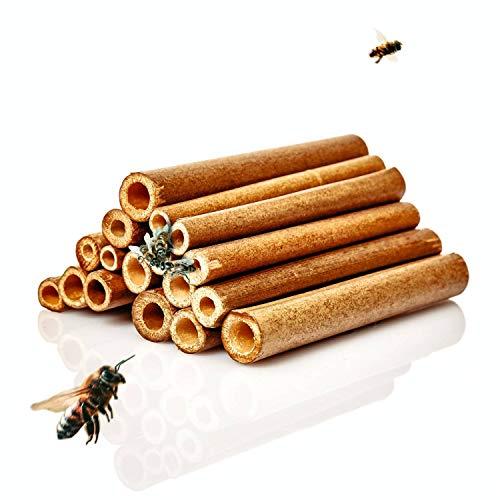 bambuswald© natürliche Nisthülsen aus Bambus ca. 15cm Länge für Wildbienen - 100% ökologische Bambusröhrchen für Insektenhotel, Niströhren & Bruthülsen als Füllmaterial für Bienenhotel