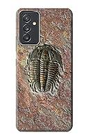 JP1454SGQ 三葉虫の化石 Trilobite Fossil For Samsung Galaxy Quantum 2 用ケース