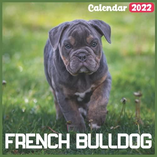 French Bulldog Calendar 2022: Official dog Calendar 2022, 18 Month Photo of cute dogs calendar 2022, Square Calendar