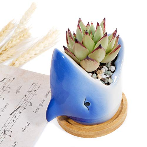 Succulent Planter Pot with Drainage Hole & Wooden Tray Cute Shark Ceramic Flower Pots for Indoor & Outdoor Garden ,Plants Not Included (1 Park)