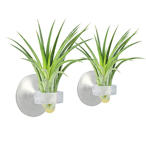 Picowe 20Pack Air Plant Holder Silicone Holder with Suction Cup for Air Pineapple Tillandsia Tiny Succulents on Glass Home Decor Display