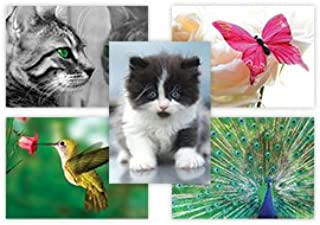 The Postcard Store Animal Kingdom, 10 Designs, 5 Of Each Design, Pack Of 50