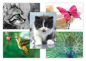 50 Tierreichskarten, preisgünstiges Postkartenset, sehr niedliche Tierpostkarten (ohne Umschlag, Postkartengröße C6)