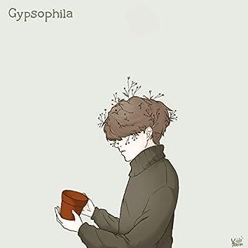 Gypshophila 안개꽃