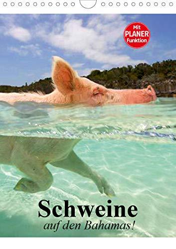 Schweine auf den Bahamas! (Wandkalender 2021 DIN A4 hoch)