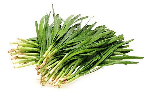 150 Graines de Ciboule de Chine - plante aromatique - légumes potager méthode BIO