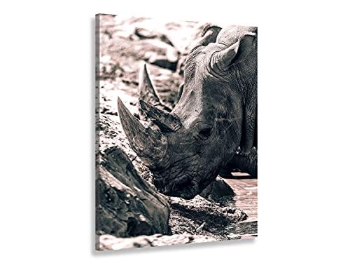 Hexoa Cuadro Rhinoceros Hommage à Sudan, fabricado en Francia – Cuadro cristal acrílico – 80 x 120 cm