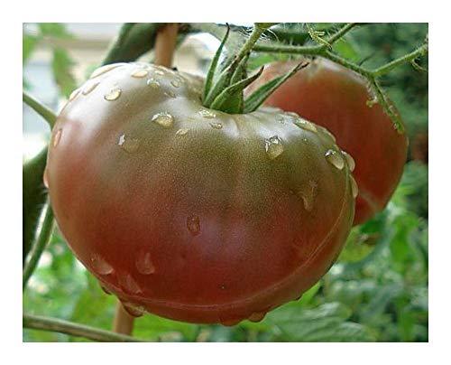 Tomate Black Krim - Tomate schwarze Krim - Tomaten Samen - 50 Samen