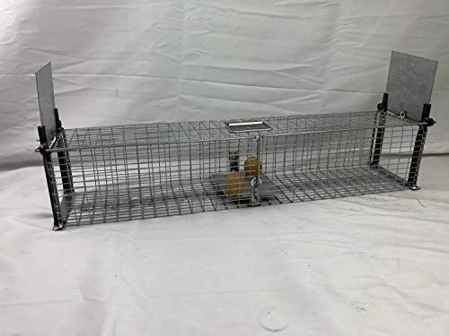 boite à oeuf piège Cage Capture fouines Rats