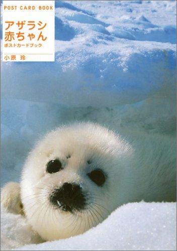 アザラシ赤ちゃん ポストカードブック (新風舎文庫)