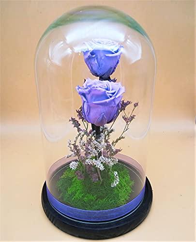 Rosas preservadas moradas Lavanda. Rosas eternas moradas. Cúpula Cristal. Altura 25 cm. Rosas moradas preservadas. Hecho en España