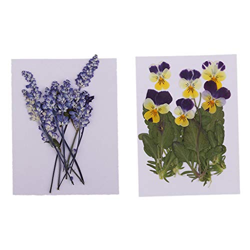 Hellery 16 Stücke Gedrückt Echt Viola Tricolor Salbei Für DIY Schmuck Machen Handwerk