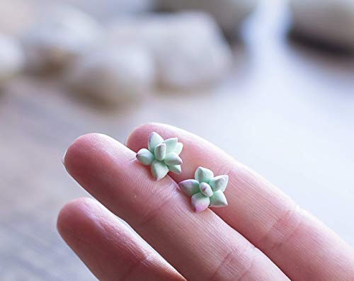 Succulent post earrings - succulent studs - succulent jewelry - botanical, nature earrings - flower post, flower studs - plant jewelry