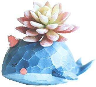 Wish you have Super sale period limited a nice In stock day Planter Resin Pots Succulent Whale Blue