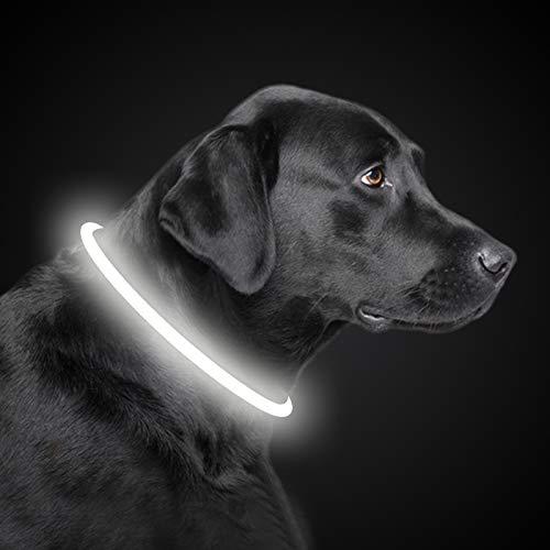 PetIsay LED Leuchthalsband Hund Halsband USB wiederaufladbar, Längenverstellbarer Haustier Sicherheit Kragen für Hunde und Katzen, 3 Modus(Weiß)