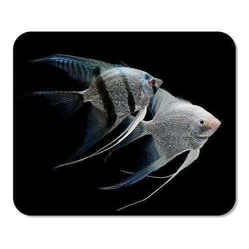 Suike Mousepad Computer Notizblock Büro Silber Kaiserfisch Engel Fisch Süßwasser Aquarium schwarz Skalar Tier Heimschule Spiel Spieler Computer Arbeiter