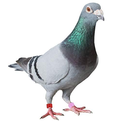 POPETPOP 100 pz Piccione Anello di plastica colorato Uccello Gamba Anelli Anelli di identificazione per Uccelli piccioni pappagalli pollame 8mm (Colore Casuale)