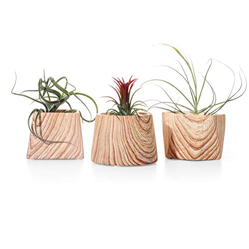 POTEY 054202 Concrete Plant Pots for Air Plants Succulent Cactus - Set of 3 Brown Wooden Pattern Cement Small Planters Indoor with Drainage Holes(Size - 3.1 + 2.9 + 2.5 Inch, Plant NOT Included)